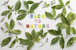 Decorative letters forming words `back to nature`. With green leaves and dried flowers on white background Royalty Free Stock Photography