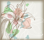 Decorative lily Stock Photography