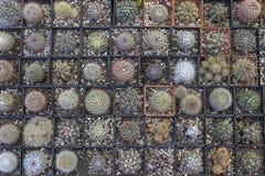 Decorative little cactuses background Royalty Free Stock Photos