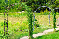 Decorative metal arch for climbing plants Royalty Free Stock Photography