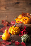 Decorative mini pumpkins and autumn leaves for halloween Stock Photo
