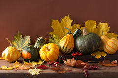 Decorative mini pumpkins and autumn leaves for halloween Royalty Free Stock Image