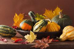 Decorative mini pumpkins and autumn leaves for halloween Royalty Free Stock Photography