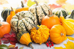 Decorative mini pumpkins for halloween Royalty Free Stock Photo
