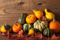 Decorative mini pumpkins on wooden background Royalty Free Stock Photo