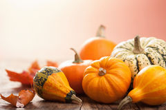 Decorative mini pumpkins on wooden background Royalty Free Stock Image