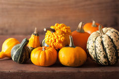 Decorative mini pumpkins on wooden background Royalty Free Stock Images