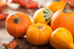 Decorative mini pumpkins on wooden background Stock Images