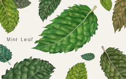 Decorative mint leaves Royalty Free Stock Photo
