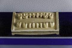 Decorative model of teeth in dentistry for interior stock photos