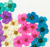 Decorative montage compilation of colorful dried spring flowers Stock Image