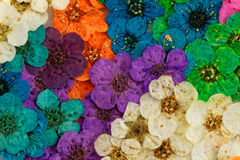 Decorative montage compilation of colorful dried spring flowers Royalty Free Stock Photos