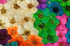 Decorative montage compilation of colorful dried spring flowers Stock Photos