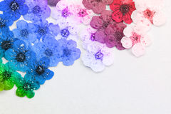 Decorative montage compilation of colorful dried spring flowers Stock Photo