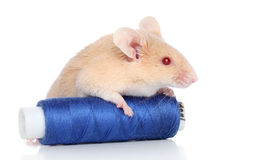 Decorative mouse on white background Stock Photo