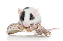 Decorative mouse on white background Stock Photography