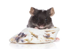 Decorative mouse on white background Royalty Free Stock Images