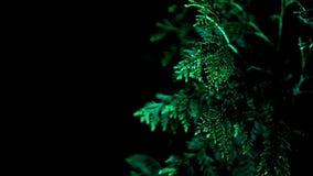 Decorative night illumination trees in garden. Multi colored illumination trees. In night garden. Colorful decorative lighting plants at night. Beautiful multi stock footage