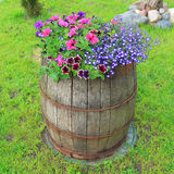 Decorative old wooden barrel with flowers Stock Image