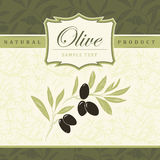 Decorative olive branch. For label, pack Royalty Free Stock Image