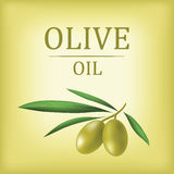 Decorative olive branch. Vector olive oil. Stock Image