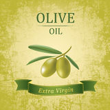 Decorative olive branch. Vector olive oil. Stock Photography