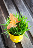 Decorative orange butterfly on fresh green grass Stock Photos
