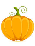 Decorative orange pumpkin. Isolated on a white background stock illustration
