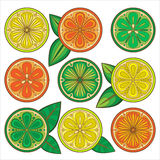 Decorative  oranges, lemons and limes Stock Photos