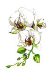 Decorative Orchid flower branch Stock Images