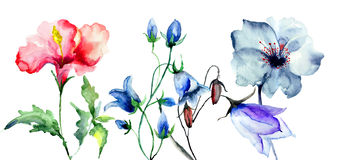 Decorative original flowers. Original garden flowers, watercolor illustration Royalty Free Stock Photo