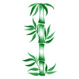 Decorative ornament bamboo Stock Image