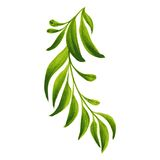 Decorative ornament branch with green leaves Royalty Free Stock Image