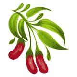 Decorative ornament red berries. Hand drawn illustration in Ukrainian folk style vector illustration