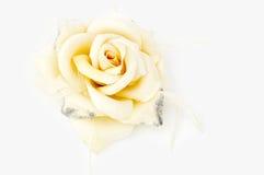 Decorative ornament a tea rose Stock Image
