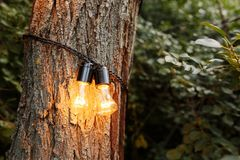 Decorative outdoor string lights hanging on tree in the garden at night time royalty free stock images