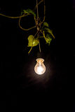 Decorative outdoor string lights hanging on tree in the garden a royalty free stock photo