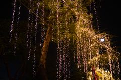 Decorative outdoor string lights hanging on tree in the garden at night time. Festivals season - decorative Christmas lights - happy new year stock image