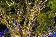 Decorative outdoor string lights hanging on tree in the garden at night time stock images