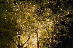 Decorative outdoor string lights hanging on tree in the garden at night time royalty free stock image