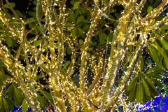Decorative outdoor string lights hanging on tree in the garden at night time. Festivals season - decorative Christmas lights - happy new year royalty free stock photography
