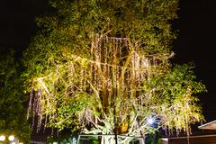 Decorative outdoor string lights hanging on tree in the garden at night time. Festivals season - decorative Christmas lights - happy new year stock photos