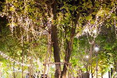 Decorative outdoor string lights hanging on tree in the garden at night time. Festivals season - decorative Christmas lights - happy new year royalty free stock photo