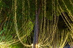 Decorative outdoor string lights hanging on tree in the garden at night time. Festivals season - decorative Christmas lights - happy new year royalty free stock photos