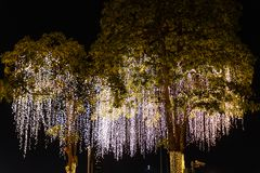 Decorative outdoor string lights hanging on tree in the garden at night time festivals season