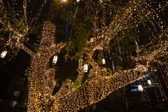 Decorative outdoor string lights hanging on tree in the garden at night time. Festivals season - decorative Christmas lights - happy new year royalty free stock image