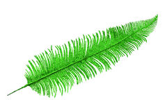 Decorative palm leaf Stock Photo