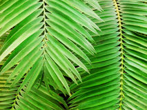 Decorative palm leafs detail Stock Image