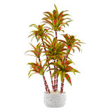 Decorative palm plant in the pot Stock Photos