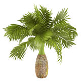 Decorative palm plant Stock Images